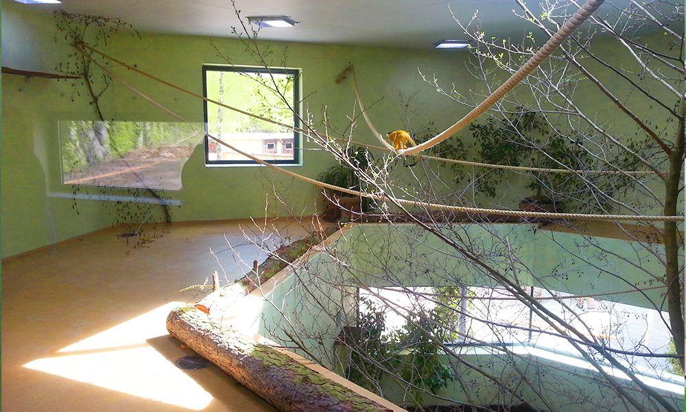 Affenhaus im Zoo Vivarium